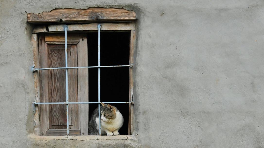 Jolán macskája